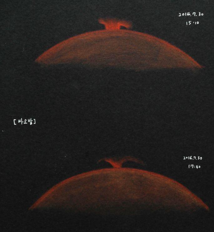 바오밥12.JPG